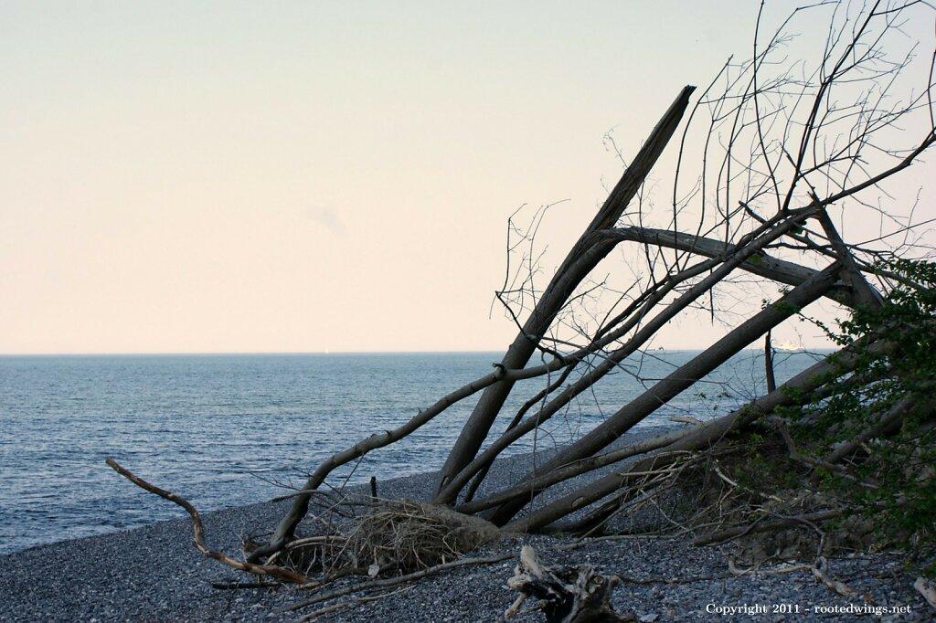 seaside. by sas